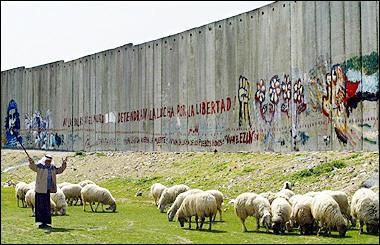 wall  sheep